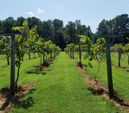 Top-Rated Wine Trail